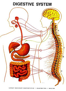 The Digestive Zone