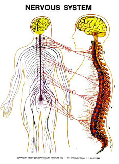 The Nervous System Zone